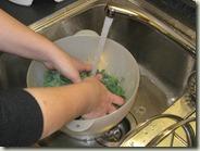 Zubereitung_Grünkohl-Kartoffelbrei_2